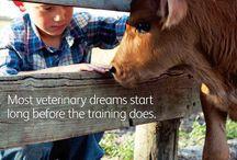 Veterinary Industry + Careers