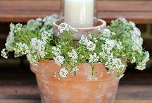 Blomster Potter + div blomster ideer