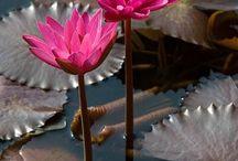 flores aquaticas