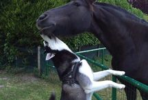állatok pussz love