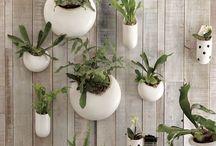 Office + Planting
