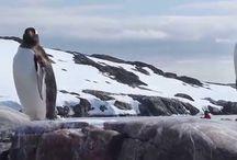 Antarctica / by Marybeth Bond