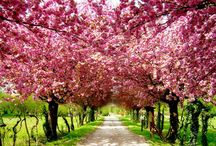 beautiful trees and flowers :)
