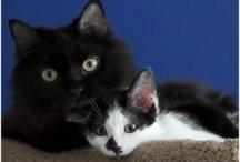 Gatti / Miao