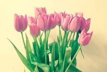 Decor / Flowers