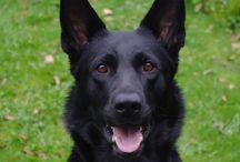 Razas de perros / Razas de perros del mundo. Fotos de perros grandes y pequeños. / by soyunalbondiga