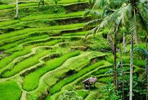 Nature / Beautiful surroundings in Indonesia