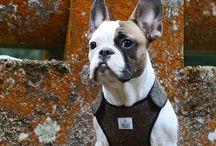 Dog-Lovers Cool / Cool ideas for your dog