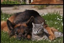 Dogs and Cats / Cute
