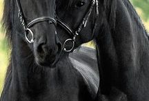 Horses / Amazing photos of beautiful creatures that I love
