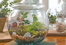 Terrariums, terraforms, moss