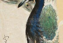 tavuskuşu