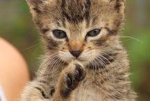 Cats<3<3