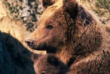 Bears / by Trish Robinson
