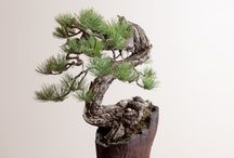 Bonsai + kusamono