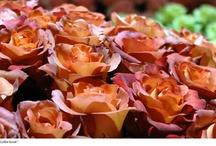 #Rosales y #Rosas / Variedades, tipos y cuidados de los rosales. Así como diferentes usos para la decoración.