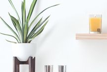 agave pineapple \\ aromatique
