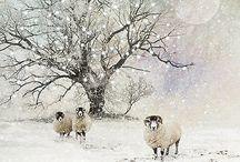 Зима и животные
