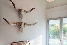 Beautiful Bones / Deer, Antelope, buffalo, ram, long horns, and moose