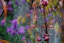 Fractal spiderweb