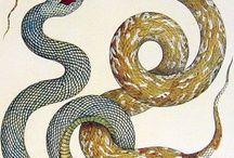slange male tecne