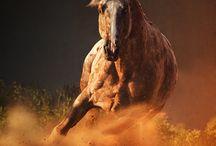 Horses: Freedom