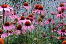 LandArch #Plant / Landscape, garden, plant, desing,
