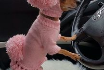 dogs pink outfit