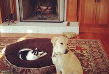 Yatağını Kedilere Kaptıran Şaşkın Köpekler /
