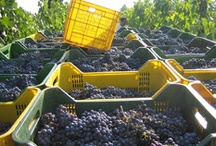 Italian Wine Love