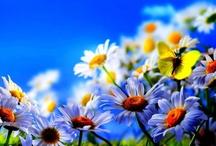 El jardín de Noah / Flores y cosas bellas rodean este bello jardín / by El jardín de Noah de Rocío P.