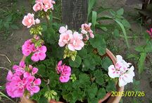 color vígasz / kertem színei