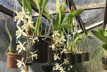 Orquídeas!!