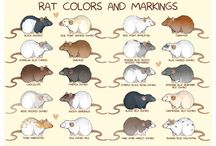Rat ideas for my rats