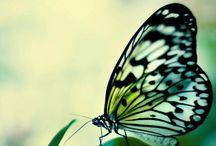 Flutterby, Butterfly