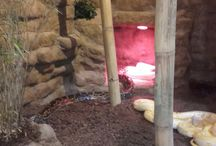 Snake enclosure / My school finals as a zookeeper in Denmark  Python bivittatus enclosure at Jyllands Park Zoo, Denmark P