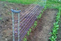 Gardening Tps & DIY Tricks