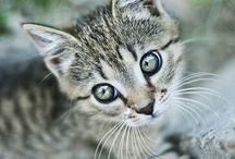 cats&kittens