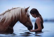 Лошади Надо попробовать
