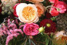 Flori de vis / Aramjamente flori