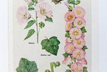 Botanical Love