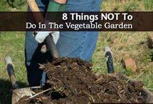 Succulents and creative garden tips
