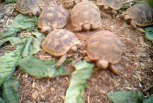 turtles - personal
