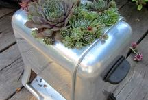 Kitchen Gardens & Potted Plants