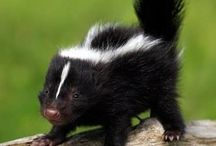 Animals / Cute small creations from God that force humans hearts melt