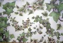 Ivy- bluszcz