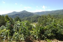 Blue Ridge Parkway and Cherokee / Mountains