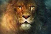 Lion of the tribe of Judah / by Anita Morena
