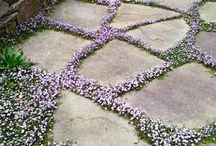 Ihana piha | Garden