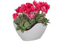Plant Arrangement & Special Pot